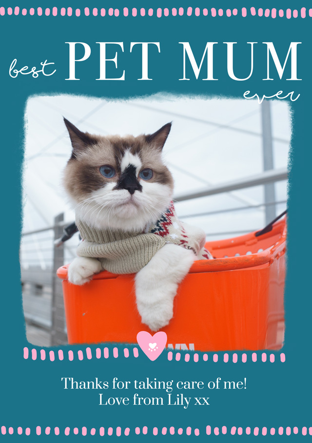 Create a Photo Mother's Day Card Best Pet Mum Photo Card